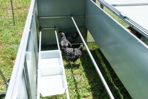 Jumbo chicken tractor nesting