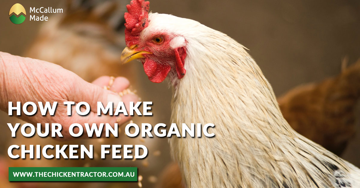 Most chicken keepers want to feed their hens non GMO, organic chicken feed. After all, you'll be eating their eggs and possibly their meat.