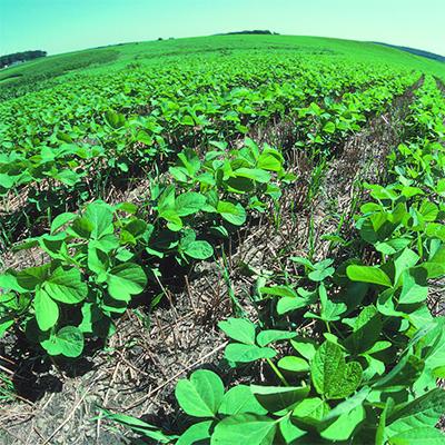 Pros And Cons Of No-Till Farming