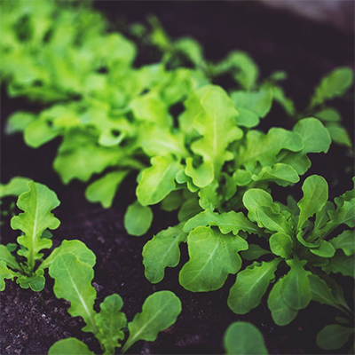 Five Permaculture Tips For A More Sustainable Organic Farm