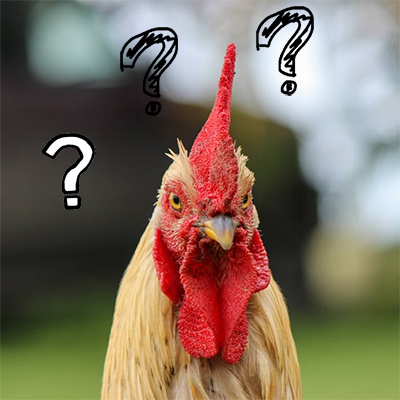 Three Questions to Ask Yourself before Deciding to Keep Chickens