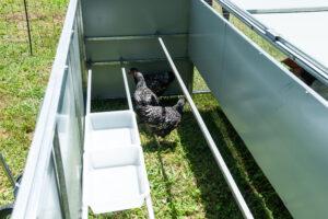Jumbo Chicken Coop Tractor Nesting area