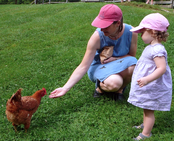Bantam chickens are great with children