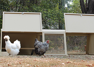 Poultry Accessories