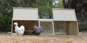 Rabbit and Chicken Hutch