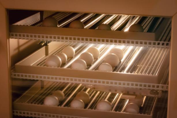 automatic egg turning method