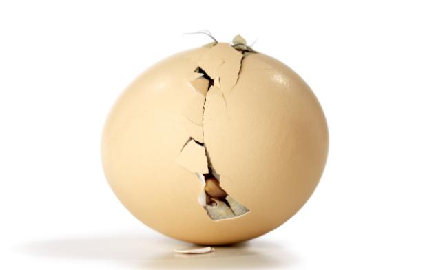 egg hatch shell