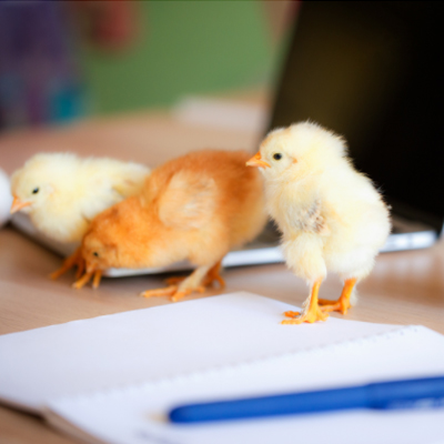 chicken keepers list featured