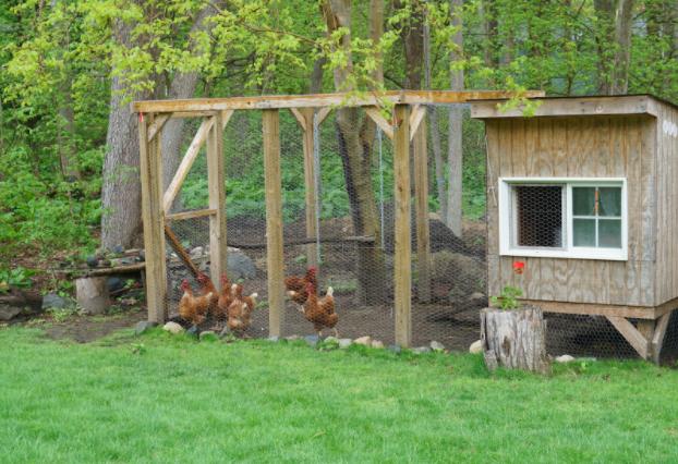 freerange chicken run